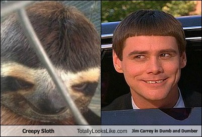Creepy Sloth Totally Looks Like Jim Carrey in Dumb and Dumber