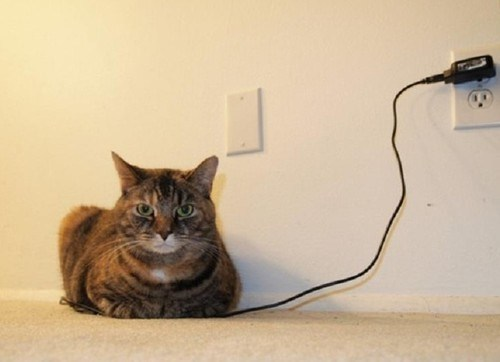 Even LOLCat needs a recharge