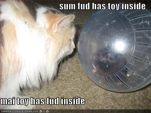 sum fud has toy inside  mai toy has fud inside