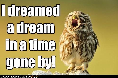 Dreaming Owl
