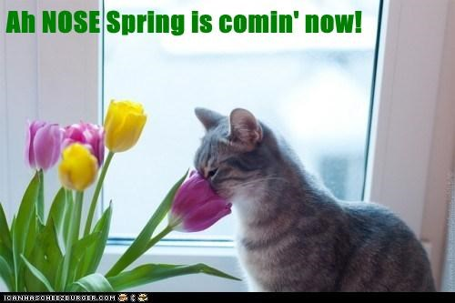 Ah NOSE Spring is Comin' Now!