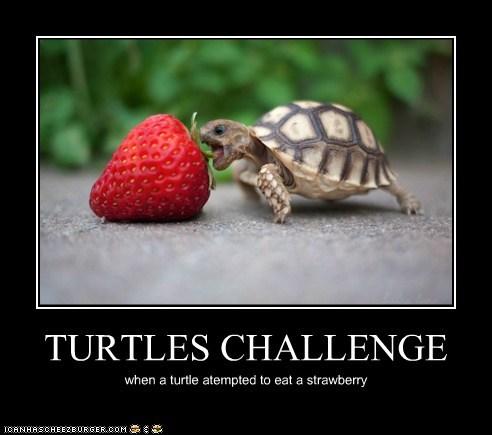 TURTLES CHALLENGE