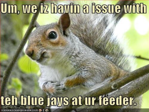 Um, we iz havin a issue with  teh blue jays at ur feeder.