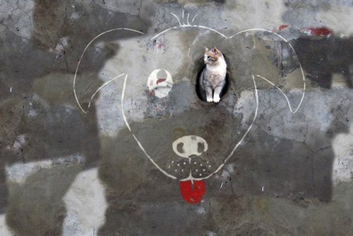Even Cats Can Enjoy Clever Street Art