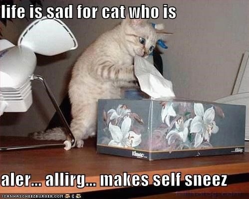 life is sad for cat who is  aler... allirg... makes self sneez