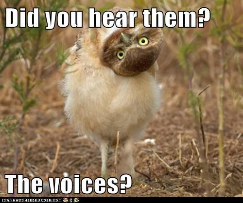 Did you hear them?  The voices?