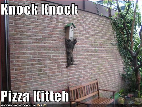 Knock Knock  Pizza Kitteh