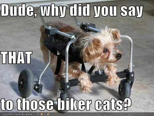 Dude, why did you say THAT to those biker cats?