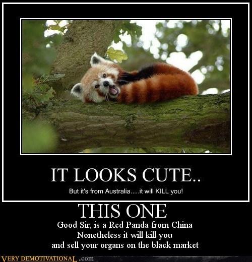 One Dangerous Panda