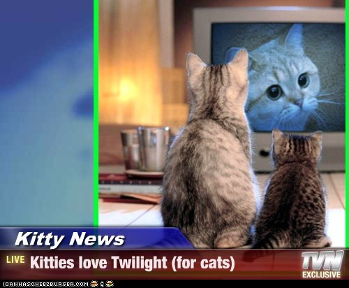 Kitty News - Kitties love Twilight (for cats)