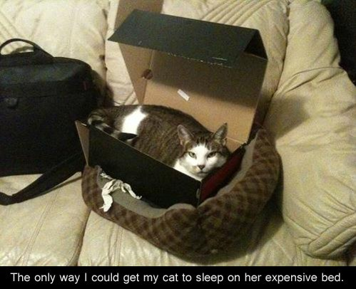 bed,box,if it fits,Cats