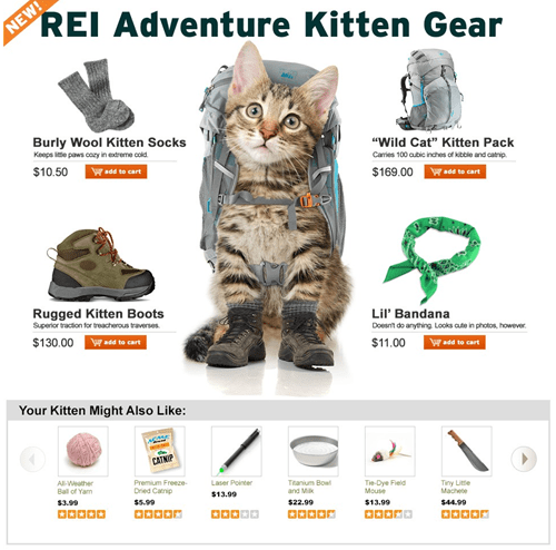 REI's New Adventure Kitten Gear