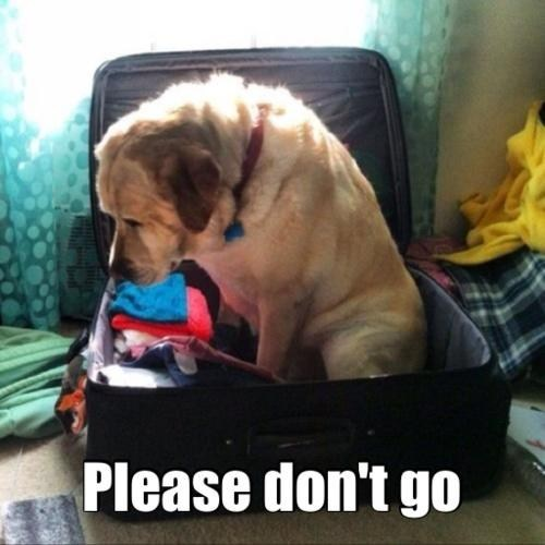 Take Me With You at Least!