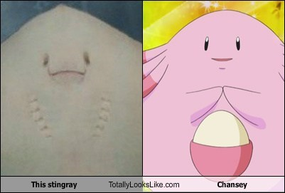 This Stingray Totally Looks Like Chansey