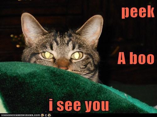 peek A boo i see you