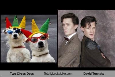 Two Circus Dogs Totally Looks Like David Tennats