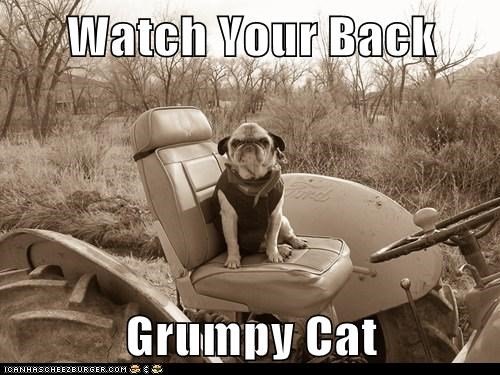 Watch Your Back   Grumpy Cat