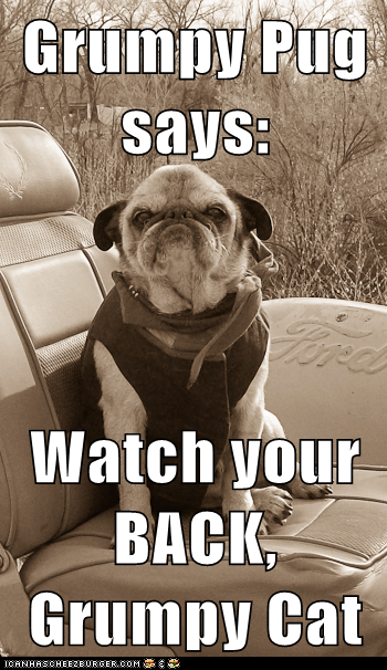 Grumpy Pug says:  Watch your BACK, Grumpy Cat