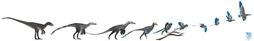 The Evolution of Birds