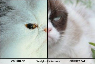 COUSIN OF Totally Looks Like GRUMPY CAT