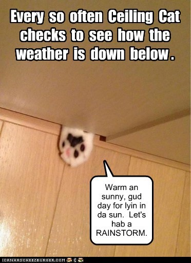 Every  so  often  Ceiling  Cat  checks  to  see  how  the  weather  is  down  below .