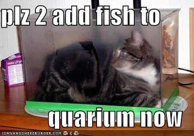 plz 2 add fish to  quarium now
