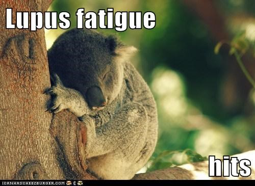 Lupus fatigue  hits