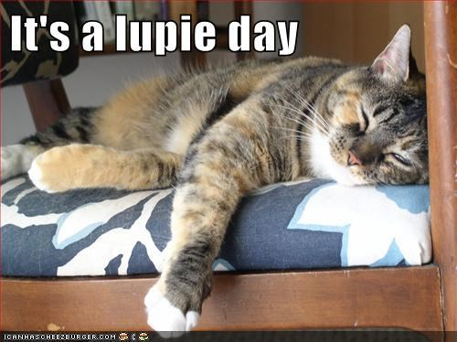 It's a lupie day