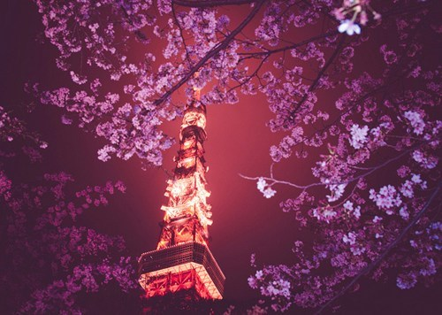 Looking Up at the Tokyo Tower
