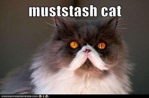 muststash cat
