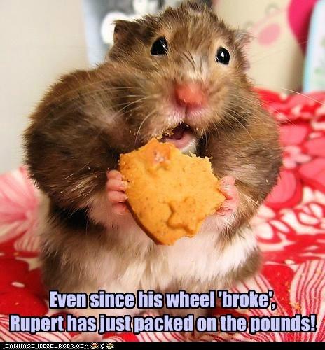 broke,wheel,fat