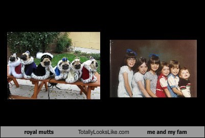 royal mutts Totally Looks Like me and my fam