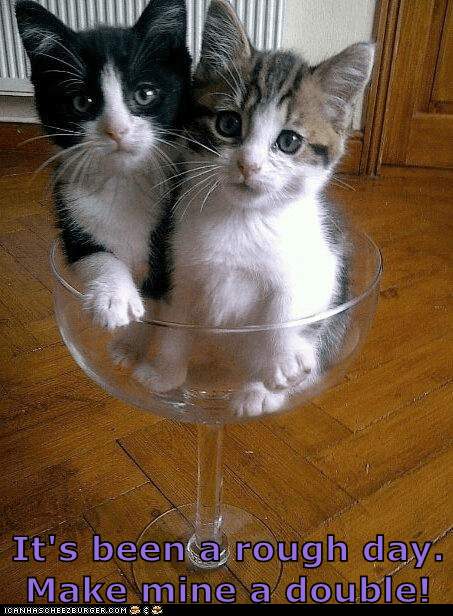 Double Kitten, Neat, Please!