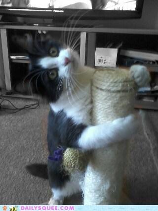 whatcha doin,play,kitty