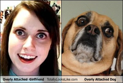 Overly Attached  Girlfriend Totally Looks Like Overly Attached Dog