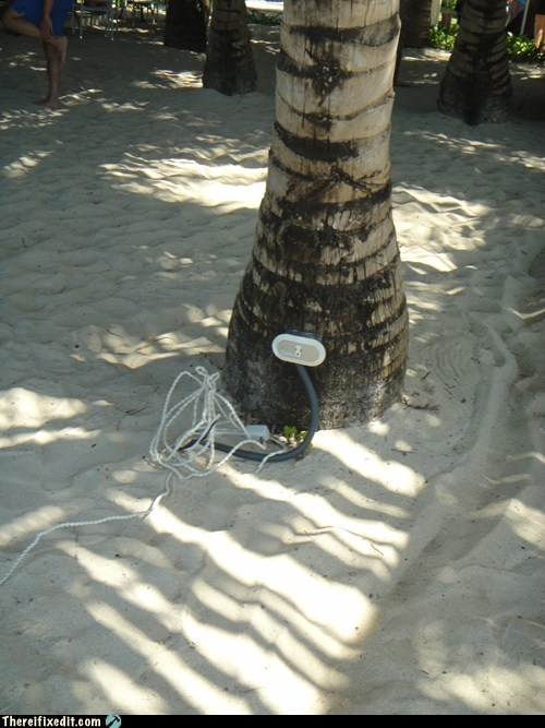 Charge Your Phone on the Palm Tree