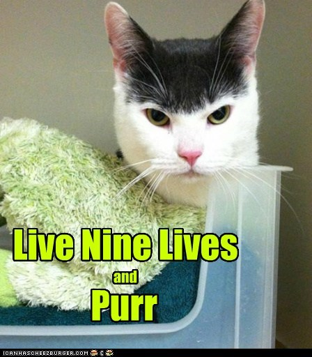 Live Nine Lives and Purr