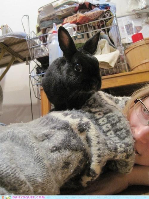 merlin,bunny