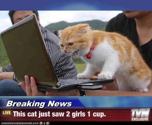 Breaking News - This cat just saw 2 girls 1 cup.