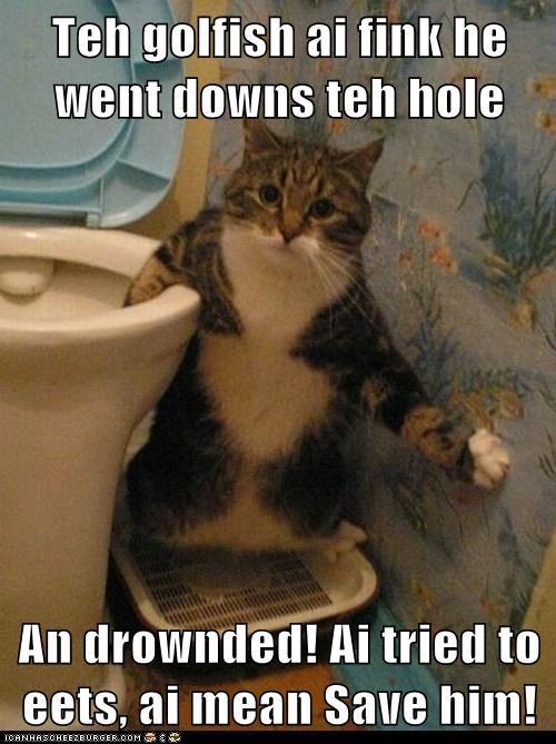 goldfish,toilet