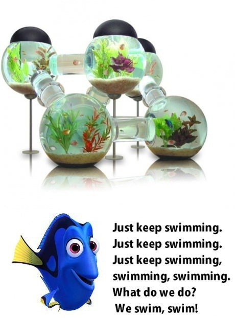 There's Always Somewhere to Go in This Fish Tank