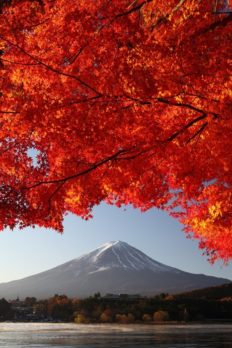 In the Arch of a Branch on the Outskirts of Fuji