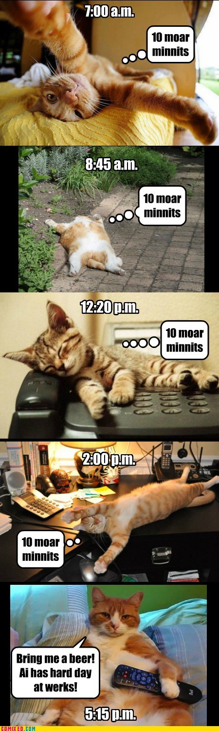 One day in the life of a working cat.