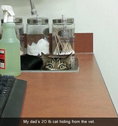 cat,vet,hiding