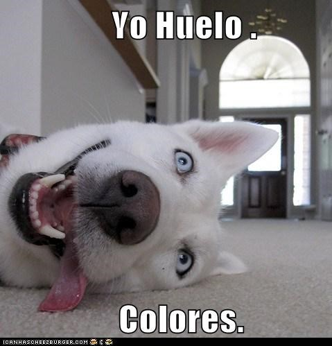 Yo Huelo .                  Colores.