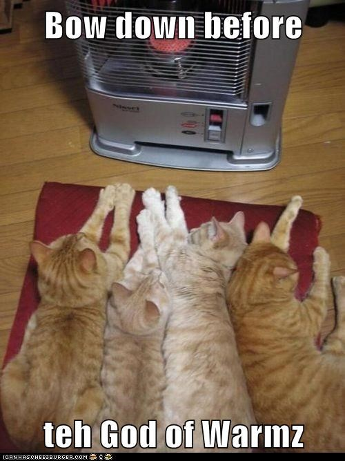 bow,warms,Cats