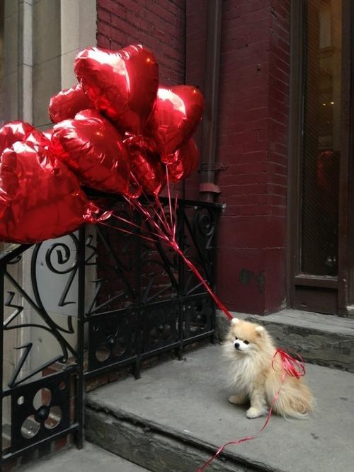 Balloons,hearts,dogs