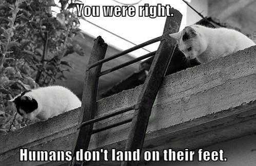 feet,mythbusters,Cats