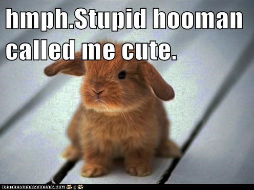 hmph.Stupid hooman called me cute.