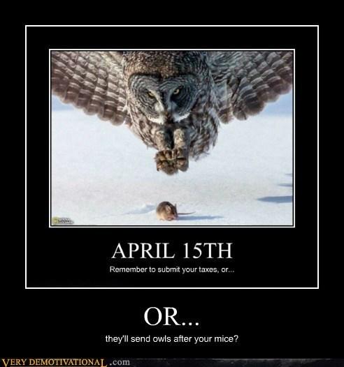 taxes,Owl,mice
